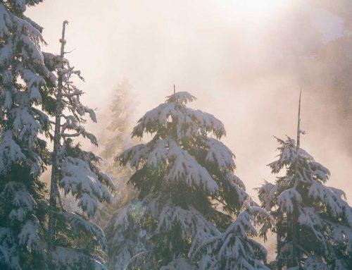 Snow Emergency Preparedness