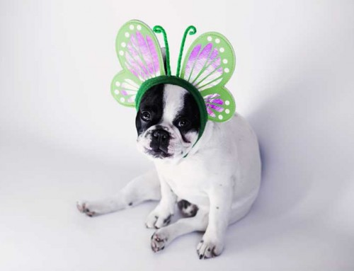 Harvest Fest is Sunday, Oct 29, 12 – 5 pm. Here Comes the Costumed Doggie Parade!!